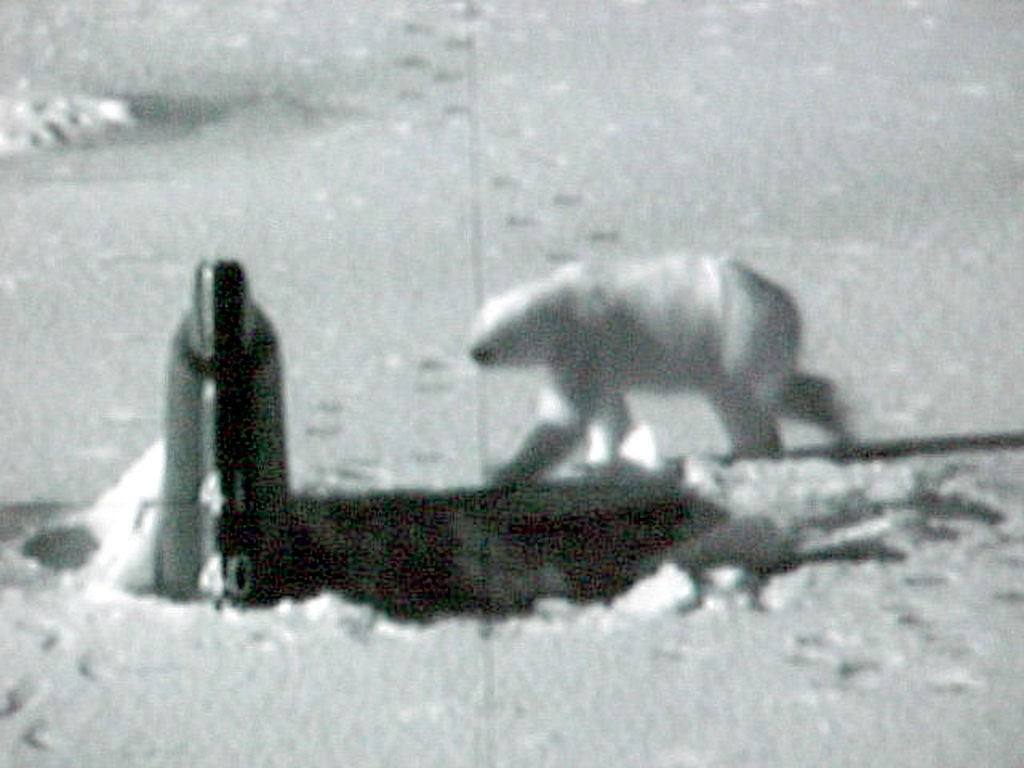 1024px-US_Navy_030427-O-0000B-003_Polar_Bear_Attacks_Sub
