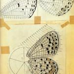 Plateformes : collectionner les papillons